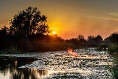 Sun que fija sobre el bosque cerca de un río Vista horizontal del adoquín del sol Imagen de archivo libre de regalías