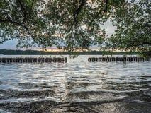 Sun que fija sobre un lago en el bosque, en verano imagen de archivo libre de regalías