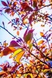 Sun que ilumina através dos ramos e das folhas de árvore Imagens de Stock