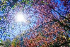 Sun que ilumina através dos ramos e das folhas de árvore Fotografia de Stock Royalty Free
