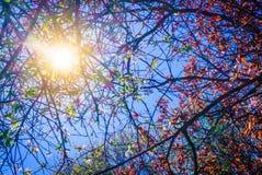 Sun que ilumina através dos ramos e das folhas de árvore Fotos de Stock