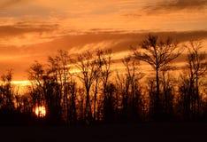Sun que levanta-se através das árvores Imagem de Stock