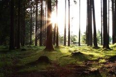 Sun que levanta-se nas madeiras Imagem de Stock