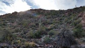 Sun que mira a escondidas en el Saguaro Fotos de archivo libres de regalías