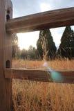 Sun que mira a escondidas a través Fotos de archivo libres de regalías