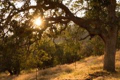 Sun que mira a escondidas a través de árbol Imagen de archivo libre de regalías