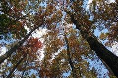 Sun que mira a escondidas a través de árboles foto de archivo