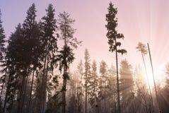 Sun que se levanta en madera brumosa Foto de archivo libre de regalías