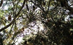 Sun que shinging através das árvores fotografia de stock royalty free
