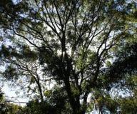 Sun que shinging através das árvores imagem de stock