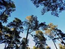 Sun que shinning em partes superiores das árvores fotografia de stock royalty free