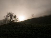 Sun que sube detrás de un prado y de un árbol en una colina Imagen de archivo