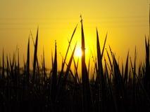 Sun que sube entre un campo Imagen de archivo