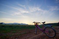 Sun que sube sobre los campos de trigo mientras que sol que sube en el bosque con la bici en ella Imágenes de archivo libres de regalías