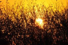 Sun que va abajo detrás de los árboles Imagen de archivo libre de regalías