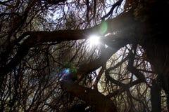 Sun que viene a través de ramas de árbol imágenes de archivo libres de regalías