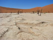 Sun queimou a terra com as árvores inoperantes em Deadvlei fotos de stock royalty free