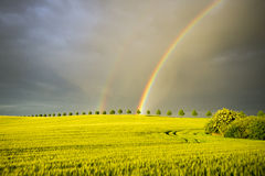Sun, rain and two rainbows over the field Royalty Free Stock Photo