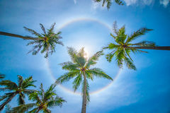 Sun rainbow circular halo phenomenon. With palm trees Stock Images