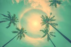 Sun rainbow circular halo phenomenon with palm trees, summer background. Sun rainbow circular halo phenomenon with palm trees, vintage summer background royalty free stock photography