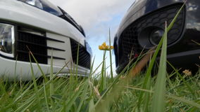 Sun rainbow grass in focus cars in background nose to nose black and white. Uncanny positioned flower in focus Royalty Free Stock Photos