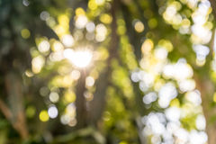 Sun ray in the blurry natural Royalty Free Stock Images