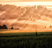 Sun ray and field way Royalty Free Stock Image