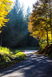 Sun ray in the forest Royalty Free Stock Photo