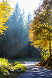 Sun ray in the forest Royalty Free Stock Photography