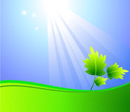 Sun ray on a leaf background Royalty Free Stock Images