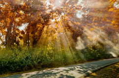 Sun ray light at Autumn forest Stock Photography