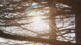 Sun ray lights and flare behind the branches. Of a tree stock video footage