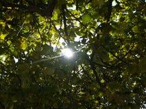Sun ray Royalty Free Stock Photography