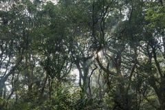 Sun ray, oblique light at Erzihping Trail. Taipei, Taiwan Royalty Free Stock Photo