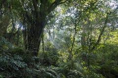 Sun ray, oblique light at Erzihping Trail. Taipei, Taiwan Royalty Free Stock Image