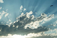 Sun rays and a seagull Royalty Free Stock Photography