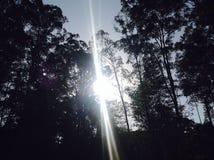 Sun Ray Striking through Tree Silhouettes Stock Images