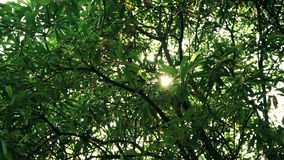 Sun ray through tree. Sun ray through green tree in park stock video footage