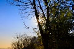 Sun Ray Through Tree met Blauwe Hemelachtergrond Stock Foto's