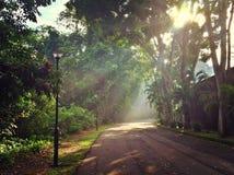 Sun rayonne briller par des arbres Image libre de droits