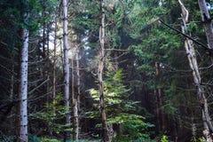 Sun rayonne briller par les arbres pendant un matin de fin d'été photographie stock