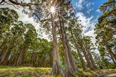 Sun rayonne des arbres Photo stock