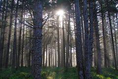 Sun rayonne la forêt de l'Orégon photographie stock
