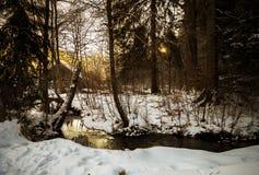Sun rayonne le rampement par les branches un matin d'hiver par la rivière photos stock