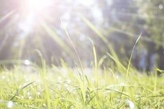Sun rayonne sur l'herbe en parc Photo stock