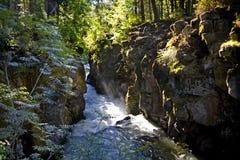 Sun rayonne vers le bas sur la gorge débarrassée des plants peu vigoureux de fleuve Images stock