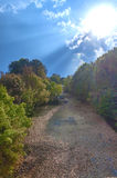 Sun-rayons sur la forêt Photographie stock