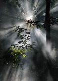 Sun rays. Seen through morning mist Royalty Free Stock Photo