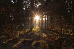 Sun-rays Lizenzfreie Stockbilder