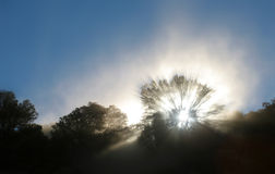 Sun Rays. Shafts of Light Streaming through a Tree shrouded in Dust Stock Images